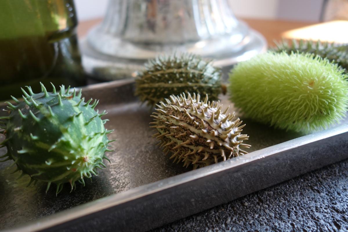 Grüne Früchte in silberner Schale